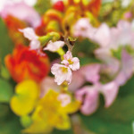 まだ2月ですが、お花屋さんは、 「春の花」で溢れています!